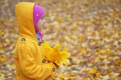 Het meisje in gele laag verzamelt gele esdoornbladeren Stock Afbeeldingen