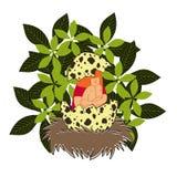 Het meisje in het nest Stock Afbeelding