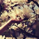 Het meisje houdt een magnoliabloem Detail van Magnoliastellata Royalty-vrije Stock Fotografie