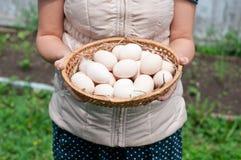 Het meisje houdt een mand met kippeneieren Stock Fotografie
