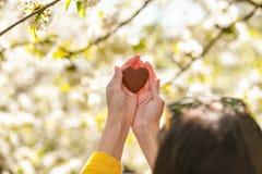 Het meisje houdt het hart in zijn handen Hart ter beschikking Concept gezonde, liefde, orgaan, donor, hoop en cardiologieschenkin royalty-vrije stock foto