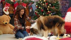 Het meisje kamt de hond vóór de vakantie stock videobeelden