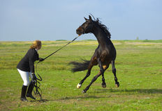 Het meisje leidt het paard op Stock Foto's