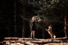 Het meisje leidt het ras van hondborder collie in het bos op royalty-vrije stock foto