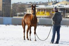Het meisje met een paard in de winter op een renbaan. Stock Fotografie