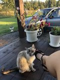 Het meisje na het werk onderaan dichtbij haar huis wordt gezeten en bewondert de tuin, wrijft haar kat tegen haar been en glimlac royalty-vrije stock afbeelding