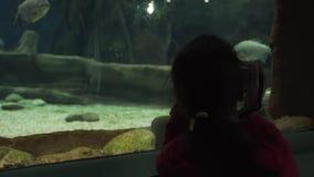 Het meisje neemt beelden van kleurrijke onderwater de lengtevideo van de wereldvoorraad stock video