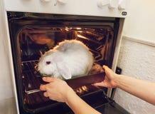 Het meisje neemt het in de oven een konijn stock foto