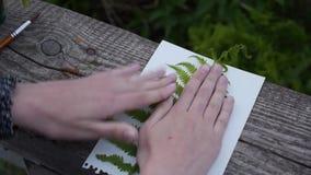 Het meisje onderbreekt een beeld van een varen op Witboek stock videobeelden