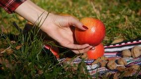 Het meisje onderzoekt en neemt een appel op Close-up Pompoen op de achtergrond stock footage