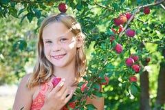 Het meisje oogst pruimen royalty-vrije stock afbeeldingen