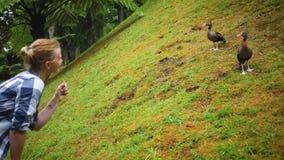 Het meisje plaagt twee eenden in het park stock footage