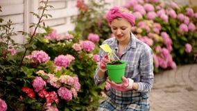 Het meisje plant bloemen in de tuin bloempotten en installaties voor het overplanten Vrouw die bloemen in pot met vuil planten stock video