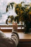 Het meisje raakt bloeiende tak met hand De lentebloei van sensualiteit Raak de delicatesse van aard Tedere meisjes` s hand Warmte Stock Foto's
