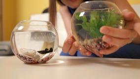 Het meisje raakt een aquarium met een vis en horloges als vissenvlotters daarin nave Een vis stock footage