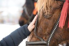 Het meisje raakt het gezicht van het paard met zijn hand hild strijkt de hand het gezicht van een paard in een teugel royalty-vrije stock afbeelding