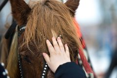 Het meisje raakt het gezicht van het paard met zijn hand hild strijkt de hand het gezicht van een paard in een teugel royalty-vrije stock foto