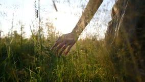 Het meisje raakt het gras met haar indient langzame motie bij zonsondergangclose-up op een gebied in de zomer, camerabeweging stock video