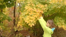 Het meisje scheurt gele bladeren van een boom stock footage