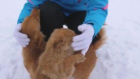 Het meisje streelt hond en puppy in de winter ijzige dag Hondenspel met hun meester op sneeuwweg De winter huisdieren stock video