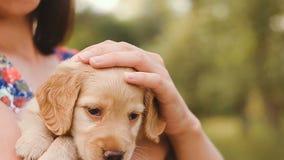 Het meisje strijkt een klein puppy stock footage