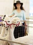 Het meisje van Alpacas en van het land stock foto's