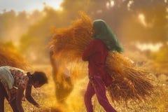 Het meisje van de dorpsarbeider in Gujarat stock foto