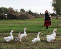 Het meisje van het dorp met ganzen stock foto