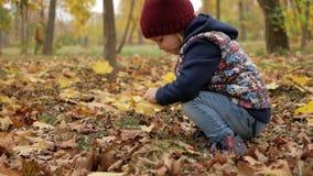 Het meisje verzamelt gele bladeren De herfst stock videobeelden