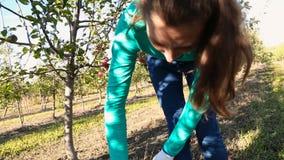 Het meisje verzamelt oogst stock videobeelden