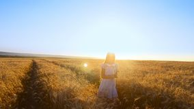 Het meisje verzamelt tarwe op het gebied stock video