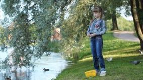Het meisje voedt de vogels op de meerkust in het park stock videobeelden