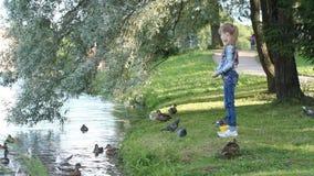 Het meisje voedt de vogels op de meerkust in het park stock video
