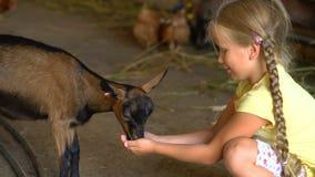Het meisje voedt een geit op een landbouwbedrijf stock footage