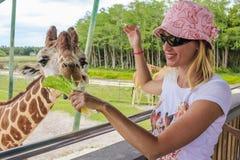 Het meisje voedt een giraf Stock Foto's