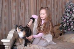 Het meisje voedt haar kat Stock Afbeeldingen