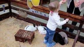 Het meisje voedt konijnen in een contactdierentuin Leuk jong geitje met konijntje stock video