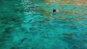 Het meisje zwemt met een masker stock footage