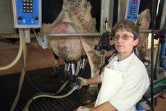Het melken van Koeien op Landbouwbedrijf Royalty-vrije Stock Afbeeldingen