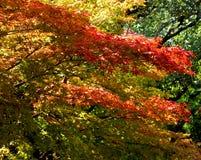 Het mengsel van kleuren Stock Foto's