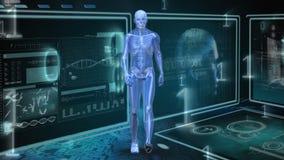 Het menselijke anatomie lopen stock illustratie