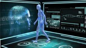 Het menselijke anatomie lopen vector illustratie