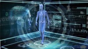 Het menselijke anatomie lopen royalty-vrije illustratie