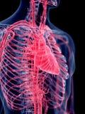 Het menselijke hart stock illustratie