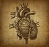 Het Menselijke hart van Grunge Royalty-vrije Stock Foto's