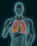 Het menselijke lichaam met zichtbare ontstoken 3d longen geeft terug Stock Afbeeldingen