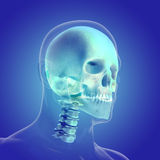 Het menselijke lichaam (organen) door Röntgenstralen op blauwe achtergrond royalty-vrije illustratie