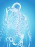 Het menselijke skelet - de rug vector illustratie