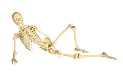 Het menselijke skelet doen leunen stock afbeelding