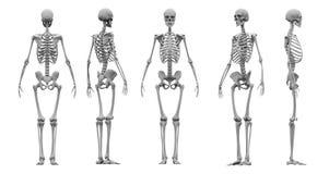 Het menselijke skelet vastgestelde 3d teruggeven vector illustratie